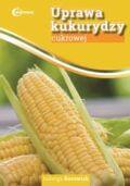 uprawa kukurydzy cukrowej